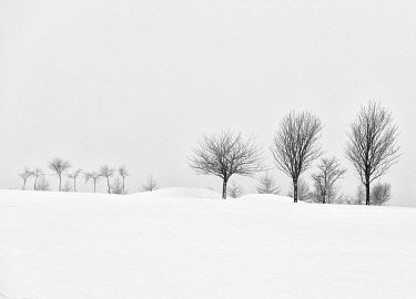ENG16368AW England, West Yorkshire, Calderdale. A winter scene of trees in snow.
