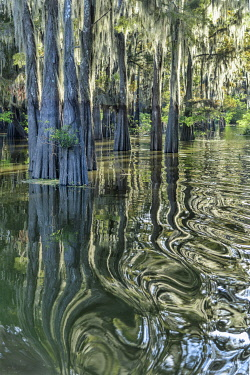 USA14730AW USA, Deep South,Louisiana, Henderson, Atchafalaya Basin