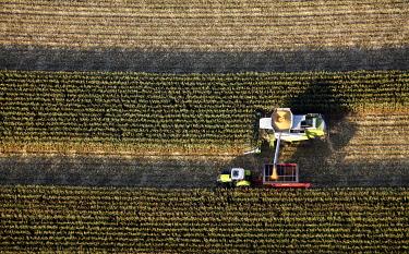 IBLBLO01722554 Aerial view, B63, Ossenbeck, corn harvest, Claas, tractor, combine harvester, north of Kreisstrasse road, Drensteinfurt, Ruhr Area, North Rhine-Westphalia, Germany, Europe