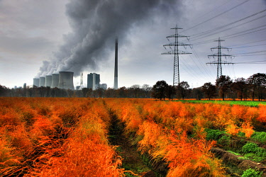 IBLJOT01737600 Faded asparagus field in autumn, in the back the E.ON coal power plant in Gelsenkirchen-Scholven, North Rhine-Westphalia, Germany, Europe