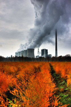 IBLJOT01737601 Faded asparagus field in autumn, in the back the E.ON coal power plant in Gelsenkirchen-Scholven, North Rhine-Westphalia, Germany, Europe