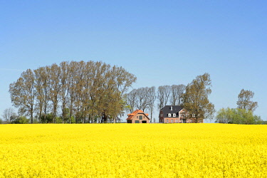 IBLSHG01680715 House next to a field of rape, Schleswig-Holstein, Germany, Europe