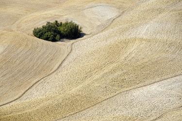 IBLDWB01888623 Landscape south of Siena, Crete Senesi, Tuscany, Italy, Europe