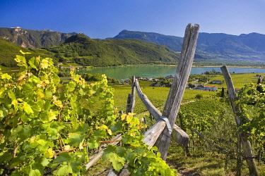 IBLLES01852195 Landscape on Lake Kaltern, province of Bolzano-Bozen, Italy, Europe