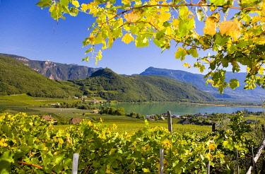 IBLLES01852198 Landscape on Lake Kaltern, province of Bolzano-Bozen, Italy, Europe