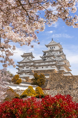 IBXMMW05039850 Blossoming cherry trees, Japanese cherry blossom, Himeji Castle, Himeji-ji, Shirasagijo or White Heron Castle, Prefecture Hyogo, Japan, Asia