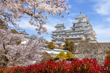 IBXMMW05039853 Blossoming cherry trees, Japanese cherry blossom, Himeji Castle, Himeji-ji, Shirasagijo or White Heron Castle, Prefecture Hyogo, Japan, Asia
