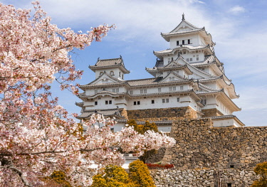 IBXMMW05039862 Blossoming cherry trees, Japanese cherry blossom, Himeji Castle, Himeji-ji, Shirasagijo or White Heron Castle, Prefecture Hyogo, Japan, Asia