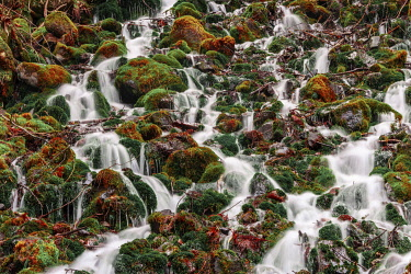 IBXMMW05040574 Water flows over mossed stones, Nagano, Matsumoto, Japan, Asia