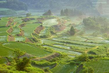 IBXTPG01793340 Paddy fields, Tokamachi, Niigata, Japan, Asia