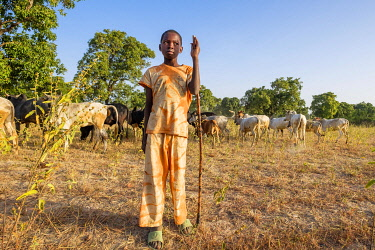 HMS3232341 Burkina Faso, Balé province, Boromo, young boy and its herd of zebbus in the countryside