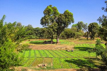 HMS3238501 Burkina Faso, Centre region, Ouagadougou, cultivation near dam number 3