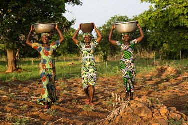 HMS3648648 Benin, Nosthern distict, Atacora department, Koussoukoingou area, women Otammari ethny back from fields