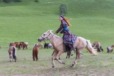 HMS3362247 China, Inner Mongolia, Hebei Province, Zhangjiakou, Bashang Grassland, Mongolian horsemen lead a troop of horses running in a group in the meadow