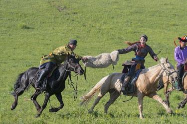 HMS3362332 China, Inner Mongolia, Hebei Province, Zhangjiakou, Bashang Grassland, Mongolians traditionnaly dressed on a horse, traditional exercise of address