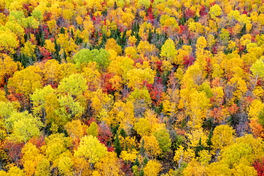 HMS3407837 Canada, province of Quebec, Charlevoix region from the sky, treetops, colorful foliage of Indian summer (aerial view)