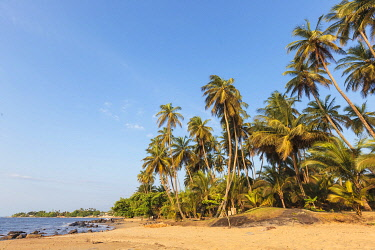 HMS3576271 Cameroon, South Region, Ocean Department, Kribi, sandy beach and palm trees by the sea