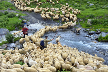 HMS3372974 Georgia, Kakheti, Tusheti National Park, Alazani River Valley in the mountains of Pirikiti, Parsma (Baso), shepherd and his flock of sheep crossing the river