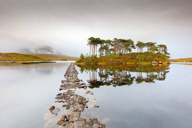 IRL1030AW Lough Inagh lake with Pines Island, Connemara, County Galway, Connacht province, Ireland,