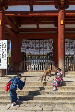 JAP2095AW Japanese tourists dressed in traditional costume take photos of a deer, Todai-ji Buddhist Temple, Nara, Japan