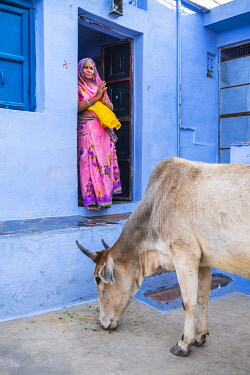 HMS3421428 India, Rajasthan, Bundi, cows in the streets of the old town