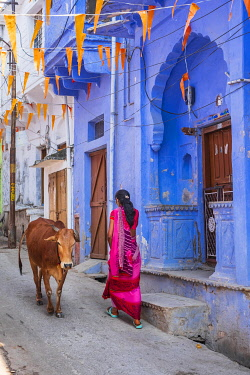 HMS3421460 India, Rajasthan, Bundi, cows in the streets of the old town