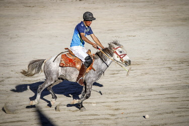 HMS3435206 India, state of Jammu and Kashmir, Himalaya, Ladakh, Indus Valley, Leh, polo player on his horse during a competition organized during the annual Ladakh Festival