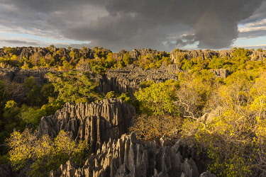 HMS3227212 Madagascar, North West region, Tsingy de Bemaraha Strict Nature Reserve park, listed as World Heritage by UNESCO