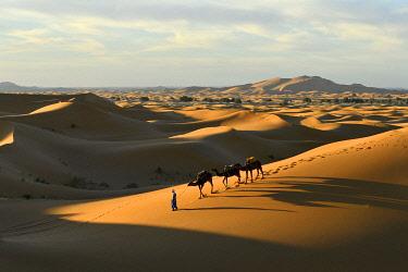 HMS3417760 Morocco, Tafilalet region, Merzouga, erg Chebbi dunes