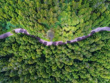 HMS3202028 France, Reunion island, Bébour Bélouve primary forest, the Petite Plaine, cryptomerias (aerial view)