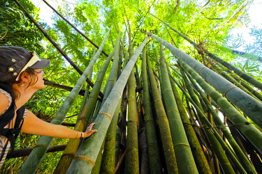 HMS3298437 France, Reunion island, Salazie, bamboos close to the former thermal baths of Herll Bourg, listed as World Heritage by UNESCO