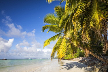 HMS3508933 Seychelles, Praslin, Anse Volbert, beach