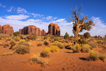 USA14962AW Rock formations and bushes on sunny day in Monument Valley, Arizona, USA