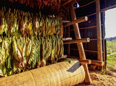 CUB1744AW Tobacco drying shed, interior, Vinales Valley, UNESCO World Heritage Site, Pinar del Rio Province, Cuba