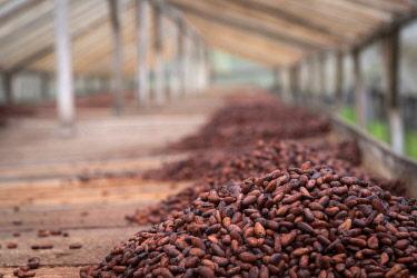 SAO1236AW Africa, S�A?o Tomè and Principe. Dried cocoa beans.