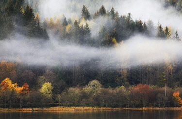 SCO35623AW Scotland, Perthshire, Callander. Misty autumn trees beside Loch Lubnaig.