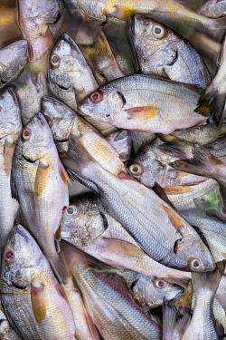 ELS0029AW Americas, Central America, El Salvador, fish for sale in a Pacific coast market