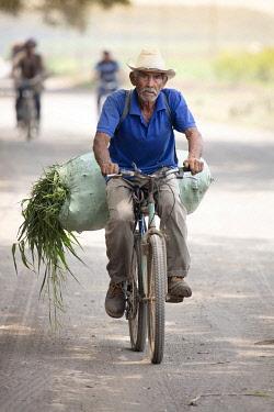 ELS0037AW Americas, Central America, El Salvador, Usulutan department, a sugar cane worker on his bike carrying sugar cane