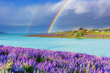 NZ9844AW A rainbow over the church of the Good Shepherd and the lupins in bloom by the lake on a sunny spring day at Tekapo, New Zealand