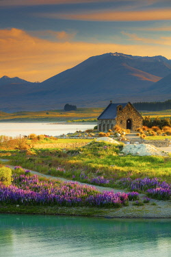 NZ9852AW The Church of the Good Shepherd and Tekapo lake with lupins in bloom by the lake at sunrise, New Zealand