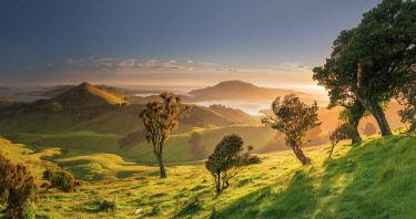 NZ9951AW Otago Peninsula near Dunedin, Hoopers inlet, South Island, New Zealand