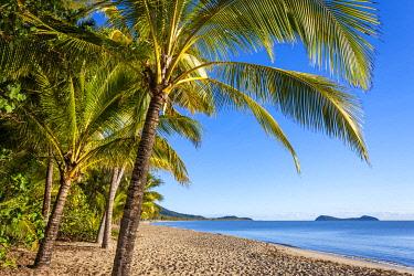 AUS3797AW Palm fringed beach at Kewarra Beach. Cairns, Far North Queensland, Queensland, Australia