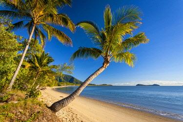 AUS3798AW Palm fringed beach at Kewarra Beach. Cairns, Far North Queensland, Queensland, Australia