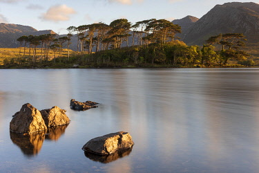 HMS3648258 Ireland, County Galway, Connemara National Park, Derryclare Lake at sunrise, Twelve Bens in the background
