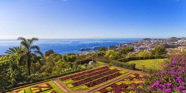 PT04093 Portugal, Madeira, Funchal, Monte, Botanical Gardens