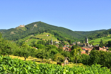 HMS3587546 France, Haut Rhin, the Alsace Wine Route, Ribeauville and it's wineyard, Saint Ulrich Castle and Girsberg Castle
