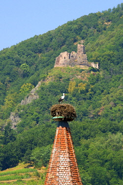 HMS3587562 France, Haut Rhin, the Alsace Wine Route, Ribeauville, Stork tower (Tour des Cigognes) with a nest of White Stork (Ciconia ciconia, in the background Girsberg Castle