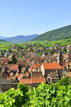 HMS3587565 France, Haut Rhin, Alsace Wine Road, Riquewihr village, labelled Les Plus Beaux Villages de France (The Most Beautiful Villages of France) and the vineyard