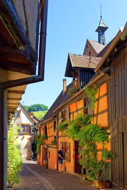 HMS3587583 France, Haut Rhin, Alsace Wine Route, Riquewihr, labelled Les Plus Beaux Villages de France (The Most Beautiful Villages of France), traditionals half timbered houses