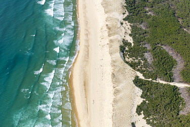HMS3607518 France, Gironde, Carcans, the beach, the dune and the pine forest (aerial view)